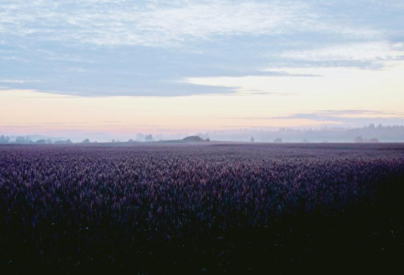 SLC - Landskap-webben-höstråg-Antonia-Husberg