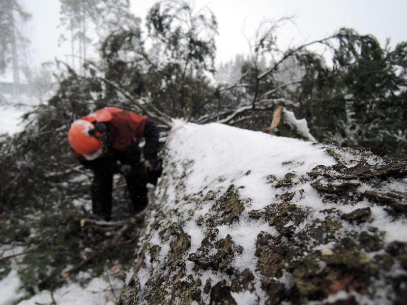 SLC - Skogsvardsforeningarna Bild Webben